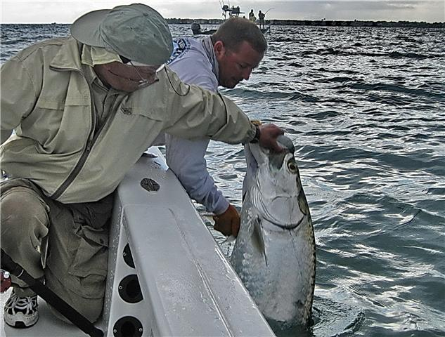 A hot tarpon fishing bite in Boca Grande Pass!