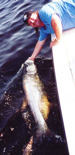 catch tarpon