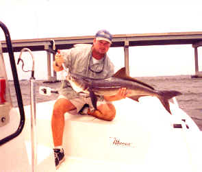 Cobia fishing near Punta Gorda in Charlotte Harbor